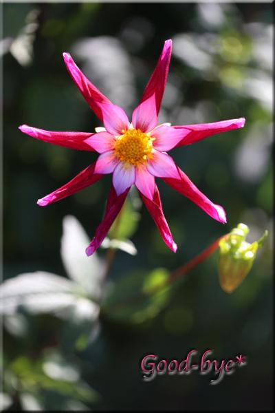 flower119c.jpg