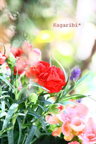 flower18a.jpg