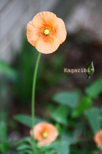 flower18b.jpg
