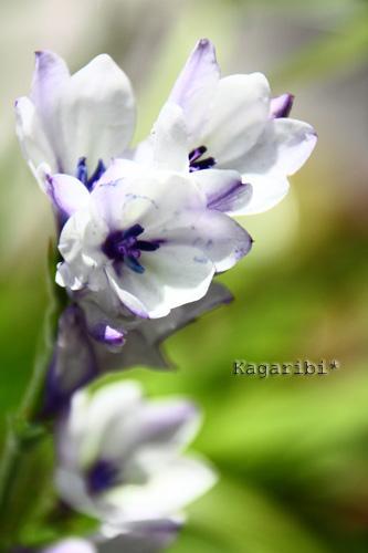 flower18d.jpg