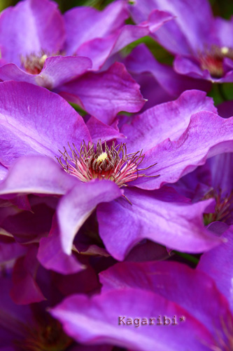 flower18e.jpg