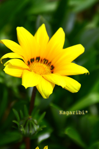 flower18f.jpg