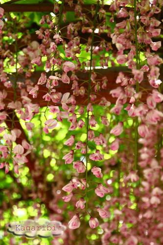 flower18g.jpg