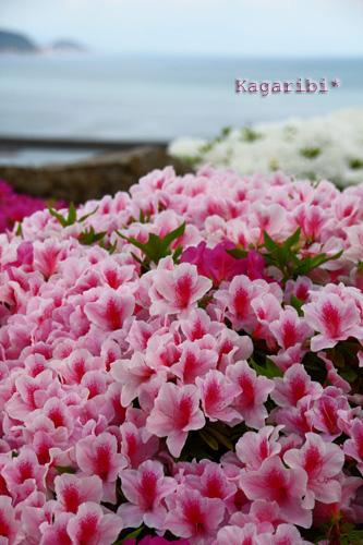 flower18i.jpg