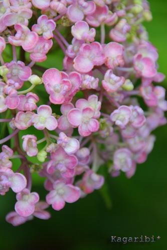 flower21a.jpg