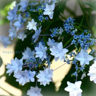 flower21b.jpg