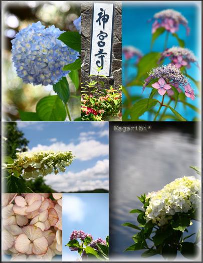 flower21d.jpg