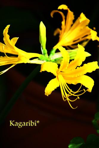 flower28d.jpg