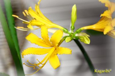 flower28e.jpg