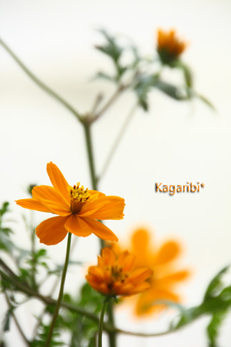 flower30a.jpg