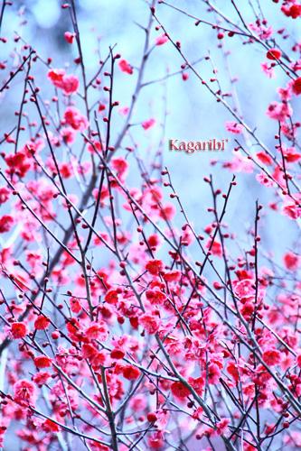 flower32a.jpg