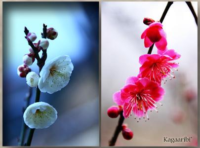 flower32b.jpg