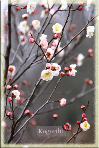 flower32d.jpg