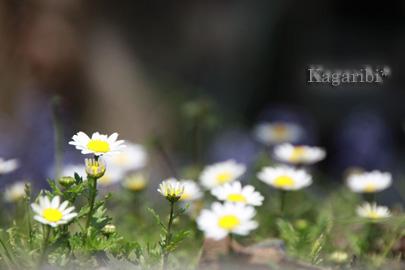 flower34a.jpg