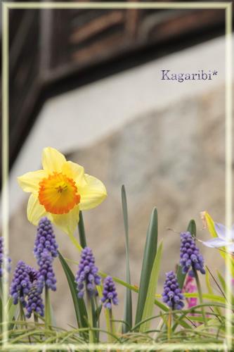 flower34b.jpg