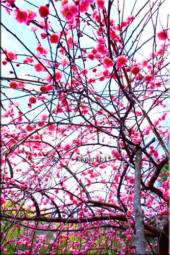 flower35a.jpg