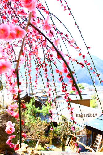 flower35c.jpg