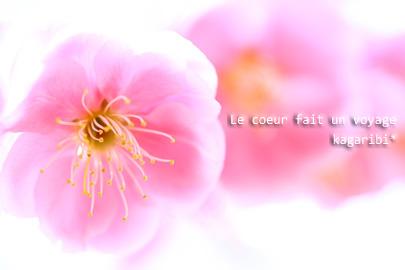flower35d.jpg