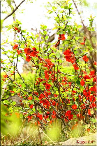 flower36b.jpg