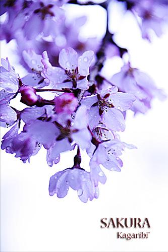 flower37a.jpg