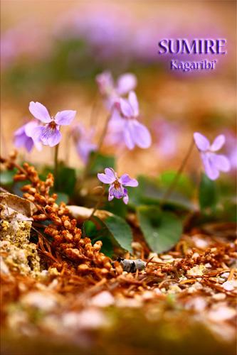 flower37b.jpg
