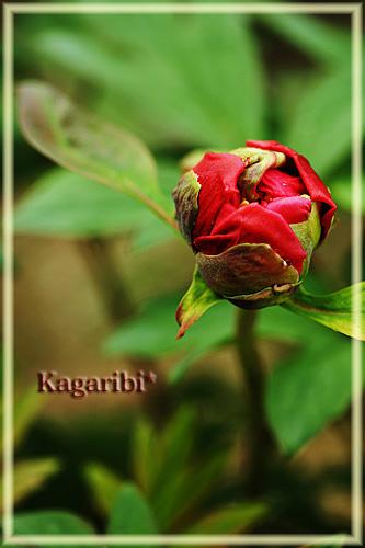 flower38a.jpg