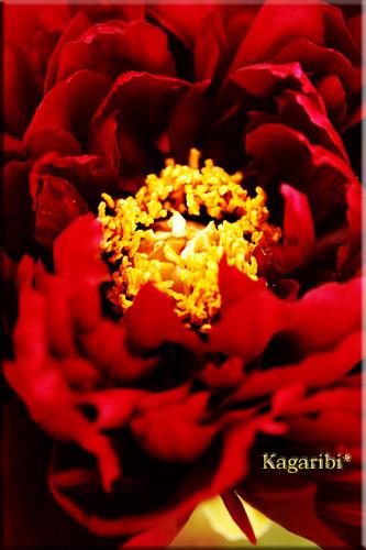 flower38c.jpg