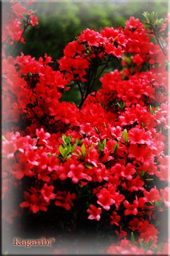 flower38d.jpg