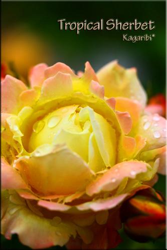 flower42a.jpg