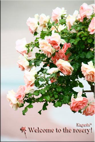 flower42b.jpg