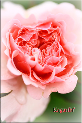 flower42c.jpg