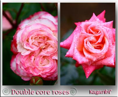 flower42e.jpg