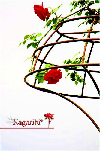 flower43b.jpg