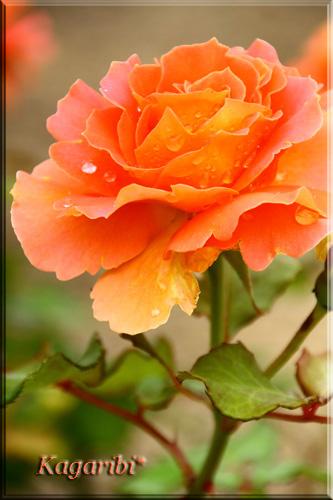 flower44a.jpg