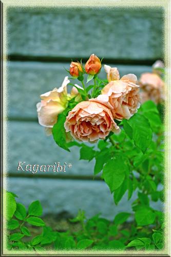 flower44b.jpg