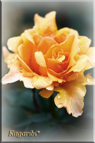 flower44c.jpg
