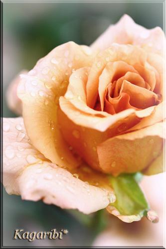 flower44d.jpg