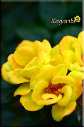 flower44e.jpg