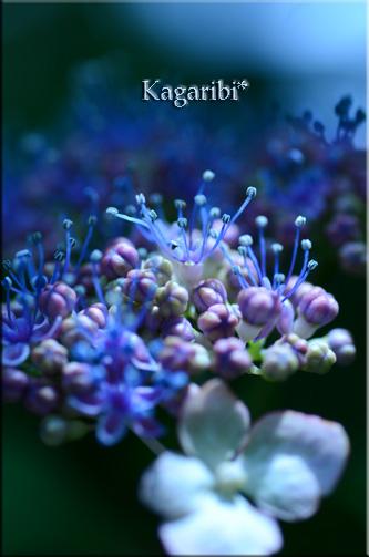 flower46a.jpg