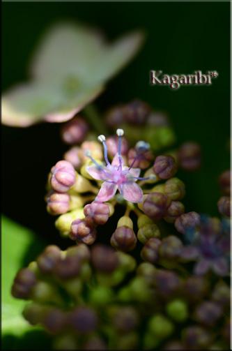 flower46b.jpg