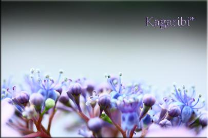 flower46c.jpg