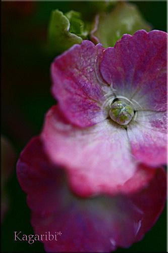 flower46d.jpg