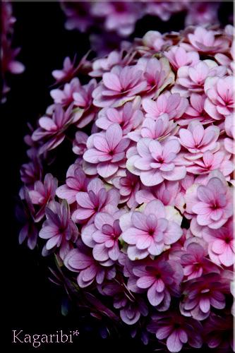 flower46e.jpg