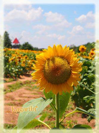 flower52a.jpg