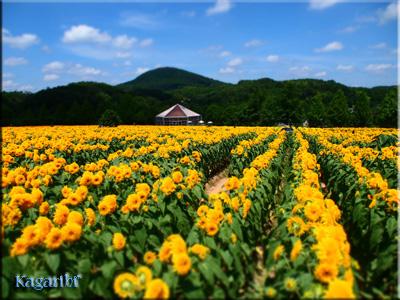 flower52b.jpg