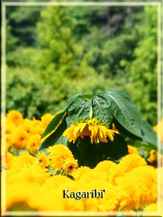 flower52c.jpg