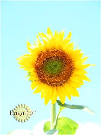 flower52d.jpg