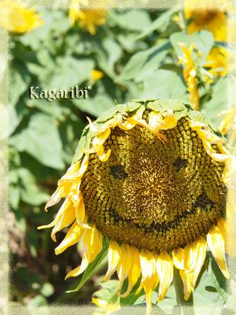 flower52e.jpg