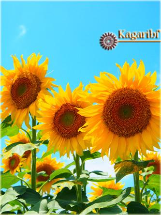 flower52f.jpg