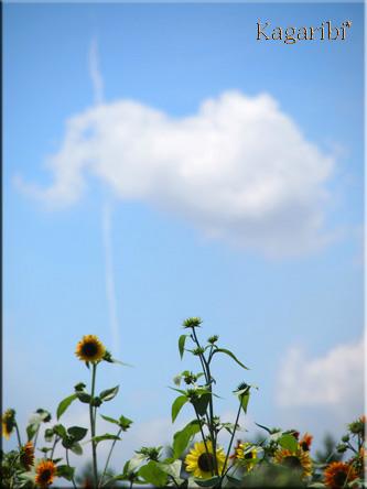 flower52g.jpg